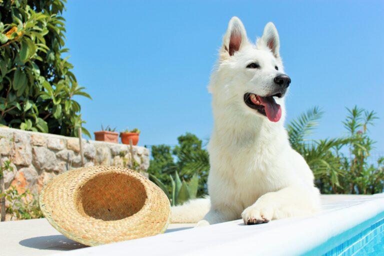 hvit hund som soler seg