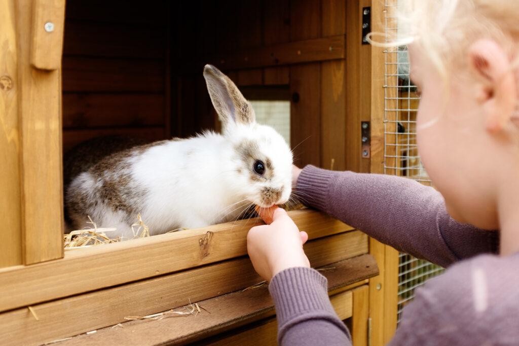 kanin som spiser gulrot