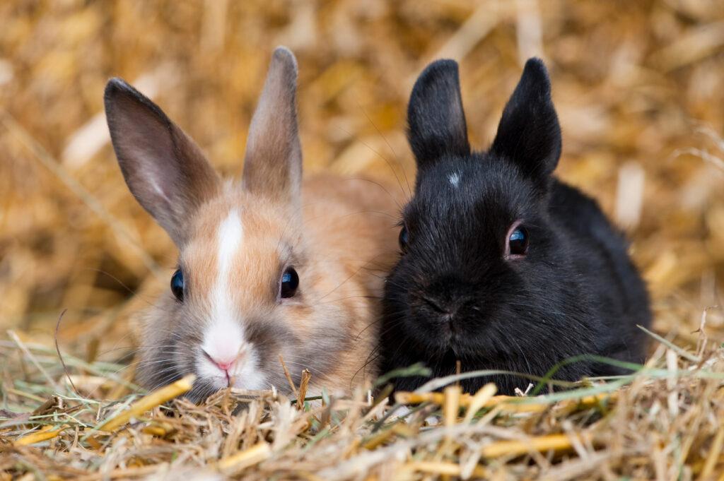 To små kaniner